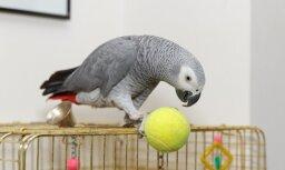 Попугай случайно сделал заказ в интернет-магазине голосом хозяйки