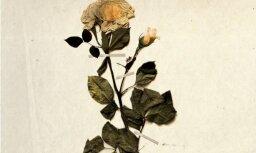 LNO gaidāms sezonas pirmais jauniestudējums – Zigmara Liepiņa opera 'Turaidas roze'