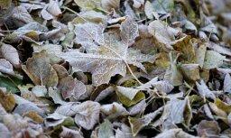 На этой неделе Латвию ждёт ветер и мокрый снег