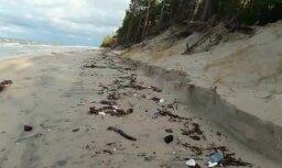 Beigti roņi un drazas – ko vēju plosītā jūra izsviež Kurzemes piekrastē