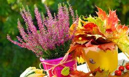 AccuWeather: в сентябре и октябре ожидается теплая погода