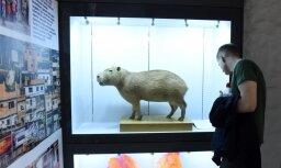 В 204 местах по всей Латвии пройдут мероприятия Ночи музеев