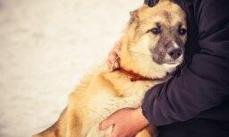 В Латвию вернулся опасный для кошек и собак вирус, схожий с бешенством