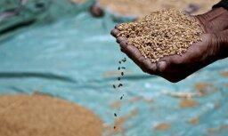 Ziemāju graudaugu ražība šogad būs zemāka nekā gadu iepriekš, prognozē LLKC