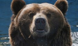 Медведь насмерть загрыз шестилетнего ребенка на Таймыре