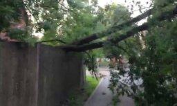 Uz 1. tramvaja vadiem Pārdaugavā uzgāzies koks; kustība atjaunota