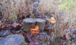 Decembra sēņu vietas pie Zaļenieku kapiem