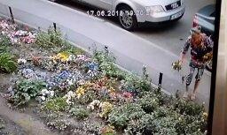 Video: Aculieciniece Purvciemā pieķer nekaunīgu puķu zagli