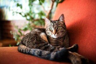 Gatavojies laikus: praktiski padomi, pirms kļūsti par kaķa-seniora saimnieku