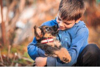 10 populārākās suņu šķirnes Latvijā
