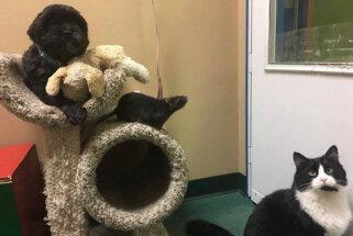 Suns, kaķis un žurka – banda, kas reiz 'valdīja' dzīvnieku patversmē