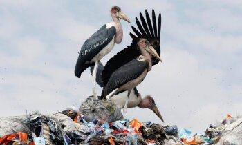 EP atbalsta vienreiz lietojamās plastmasas izstrādājumu aizliegumu