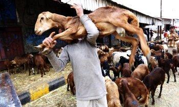 Foto: Kara plosītajā Sanā tirdzinieki gatavojas Upurēšanas svētkiem