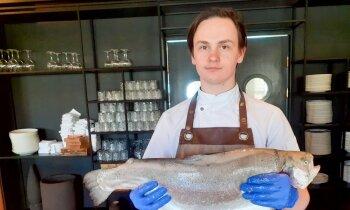 Foto pamācība soli pa solim: kā tīrīt zivi un sagatavot fileju