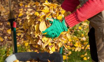 Apgrūtinājums vai ieguvums – ko iesākt ar rudens lapām dārzā