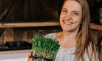 Микрозелень — от бизнес-идеи до воплощения: в гостях у Даце Дамберги в Талси