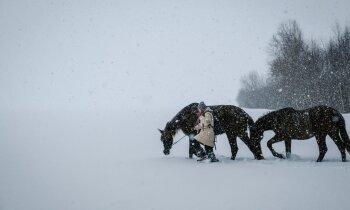 Pasakains pārgājiens. 10 kilometru ar laimes zirgiem
