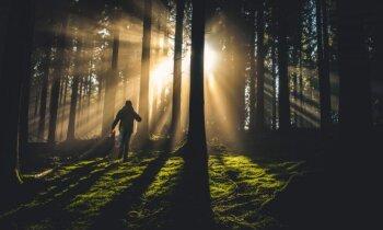 14 gadus veco Oskaru mežā pie Babītes pamanījis kāds vīrs