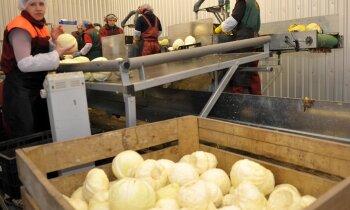 Zem izsoles āmura nonāk viens no lielākajiem pašmāju dārzeņu ražotājiem