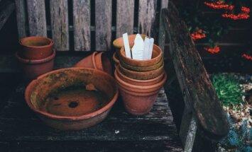 Zemes 'neaiztikšana' un agrohomeopātija – alternatīvās dārzkopības metodes