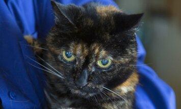 Miris pasaulē vecākais kaķis, kurš pamanījās nodzīvot 27 gadus