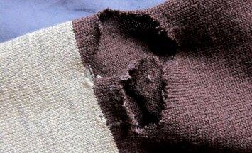 Кто ел мой свитер: 8 видов насекомых, которые грызут одежду