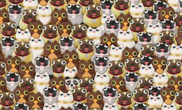 Interneta hits: Vai spēj atrast pandu?