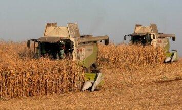 Raža šogad mazāka; graudu iepirkuma cena kritusies par 24%