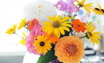Labāk egles zaru nekā tādas – puķes, ko latviešu sievietēm nepatīk saņemt