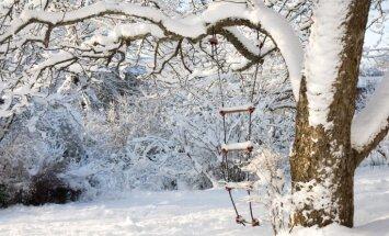 Ziema kopumā bijusi pusgrādu siltāka par normu un aukstākā pēdējos piecos gados