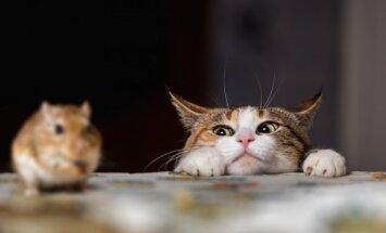 Kaķi apdraud ne tikai grauzējus, bet arī citus dzīvniekus, uzstāj pētnieki
