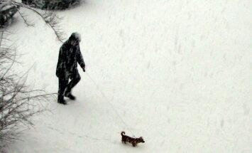Foto: Kā Jelgavā atgriezās ziema