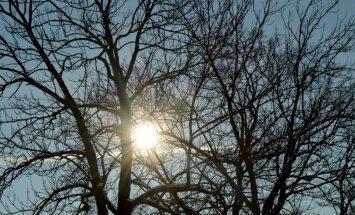 Trešdien četrās vietās pārspēts 15.februāra siltuma rekords