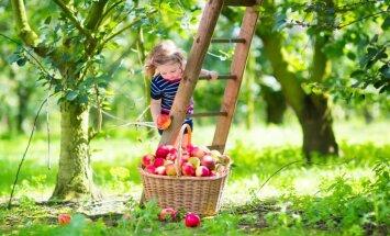 Dārza darbu kalendārs: ko jāsteidz izdarīt septembrī?