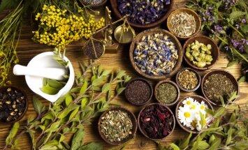 Zāļu zinātājas gudrības par augu dziedinošo spēku