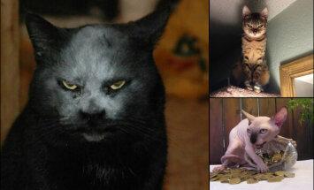 16 фото, авторы которых ценой жизни запечатлели сатанинскую сущность котов