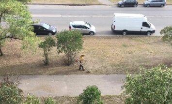 """ВИДЕО: Волшебную косим трын-траву. Газонокосильщик зачем-то """"бреет"""" выгоревший газон"""