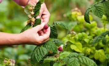 Грибы, ягоды, улитки: нужно ли платить налог за сбор даров природы?