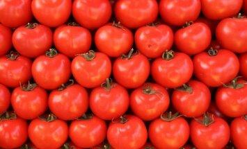 'Getliņi EKO' tomātu audzēšanas apmēru palielināšanai varētu investēt miljonu latu