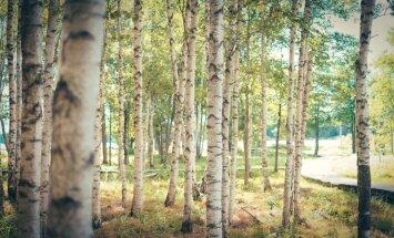 Lielezera dabas taka Limbažos – īstā vieta nesteidzīgai rudens baudīšanai