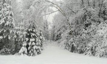 На востоке страны сохраняется снег глубиной до 20 см