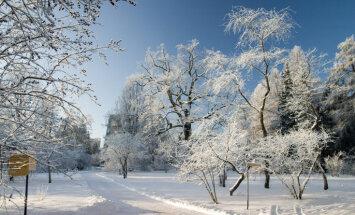 LU Botāniskais dārzs aicina uz Ziemassvētku tirdziņu