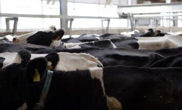 LPCS: piena pārstrādātājiem ir izdevies aizstāt Krieviju ar citiem eksporta tirgiem
