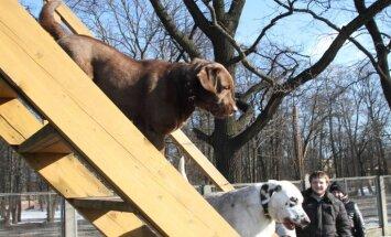 Rīgā suņu pastaigu laukumu apsaimniekošana trīs gados izmaksās 18 889 eiro