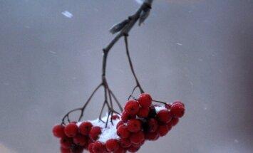 Dokumentē ziemas vēstnesi – sniegu un sūti 'Delfi Aculieciniekam'!