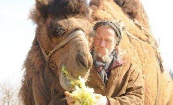 Neparasta ceļošana – šveicietis Gruzijā ierodas uz kamieļa
