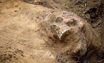 Aizvēsturiskie bērni kāpuši kokos – atklāj 3,3 miljonu gadus veca fosilija