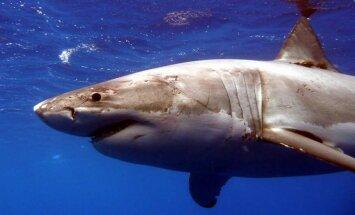 ВИДЕО: Спасатель на руках отнес в воду выбросившуюся на пляж акулу