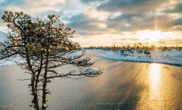 Ar pārgājieniem dažādos Latvijas purvos atzīmēs Mitrāju dienu