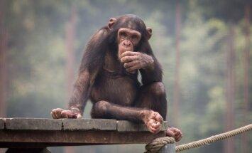 Astoņi dzīvnieki, kas ietekmējuši pasaules attīstību